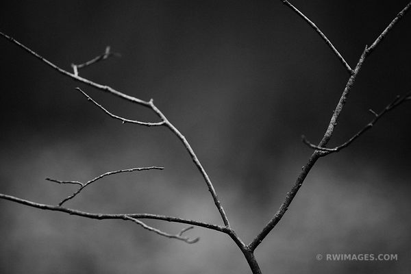 AUTUMN FOREST MINIMALISTIC NATURE ABSTRACT BLACK AND WHITE