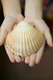 child displaying seashell in hands