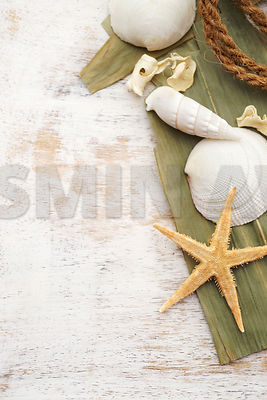 Starfish and seashells on old wood with copy space