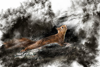 Art-Digital-Alain-Thimmesch-Animal-Divers-22