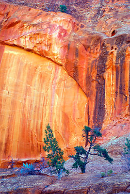 Bright_wall_with_trees_Long_Canyon