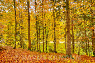 Forest with autumn colors - Gruyère