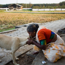 Meena, an elderly resident,  makes a fuss of one of the villages two dogs.