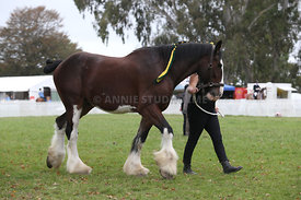 HOY_220314_Clydesdales_2371