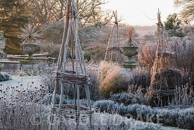 Frosty remains of herbaceous plants in the Rainbow Garden with cordylines in urns beside the terrace beyond. Kingston Maurward Gardens, Dorchester. Dorset, UK