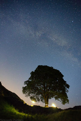 Sycamore Gap at night.