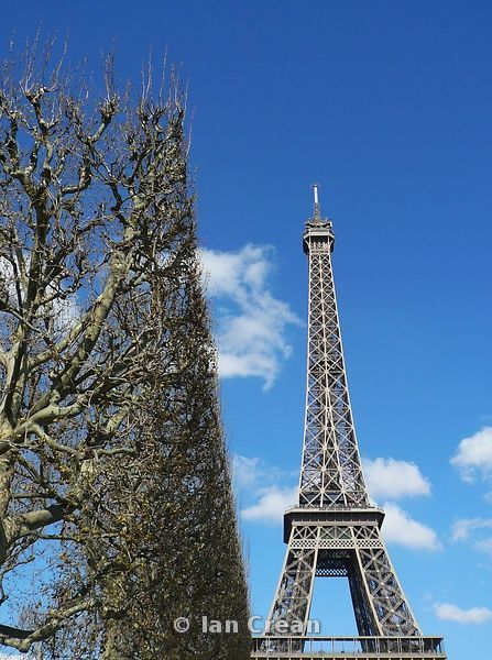 Eiffel Tower with lime tree hedge