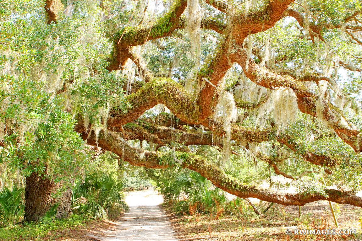 Photo print of live oaks cumberland island georgia print for Photography prints for sale