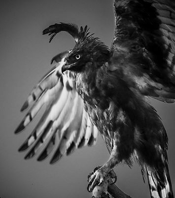 46456-Bird_Laurent_Baheux