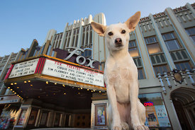 Chihuahua Mix Dog Sitting In Front of Theater