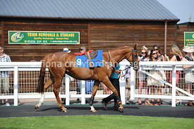 Handicap Hurdle Race with winner American Legend