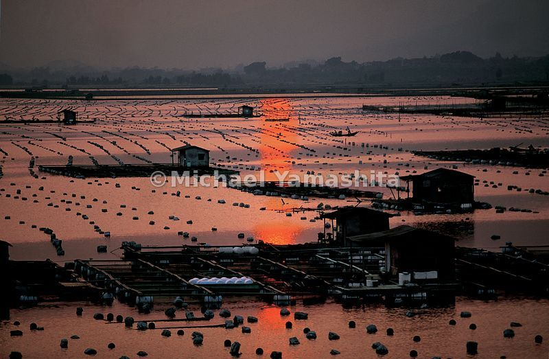The last  rays  of the day are reflected in oyster beds off Xiamen.