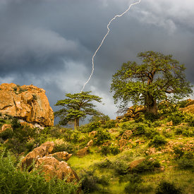 Bead Lightning and Baobabs photos