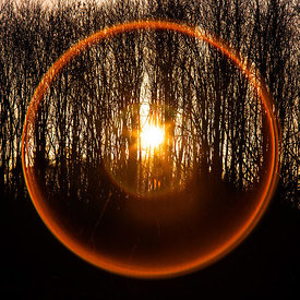 Low Setting Sun and Lens Flare Through the Trees