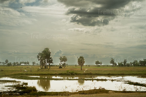 Cloudscape over rice paddies in the Cambodia countryside