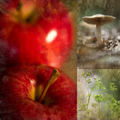Red Apple Photography | Mushroom in Art | Dill Flower