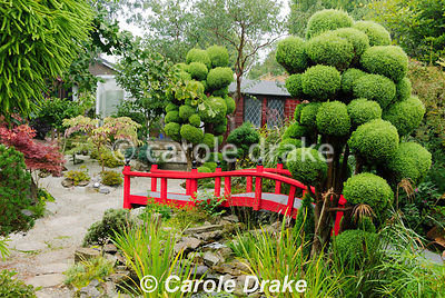 Cloud pruned conifers frame a bright red Nikko bridge in the Japanese garden. The Croft, Yarnscombe, Devon, UK
