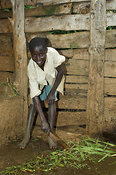 African boy sweeping organic farmyard manure from ground into collection tank , Kenya Africa