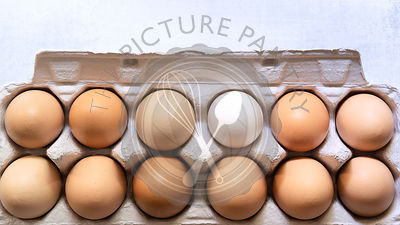 Hen eggs in a cardboard container.