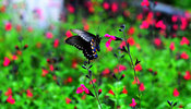 Nature Stock Photos: Red Flowers weith Butterfly