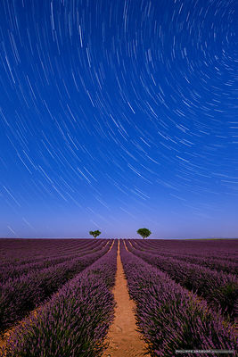 Lavender under the stars - Valensole - Alpes Haute Provence