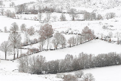 Trees in a snowy day, in the Montalegre region. Trás-os-Montes, Portugal