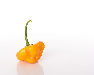 Jamaican-Hot-yellow-Chile-Pepper-0289648