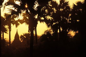 Palms and Paya, sunset