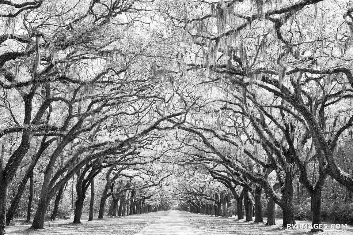 WORMSLOE PLANTATION SAVANNAH GEORGIA BLACK AND WHITE