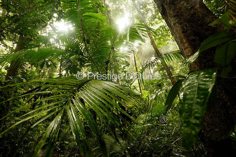 Lush Vegetation in Mossman Gorge