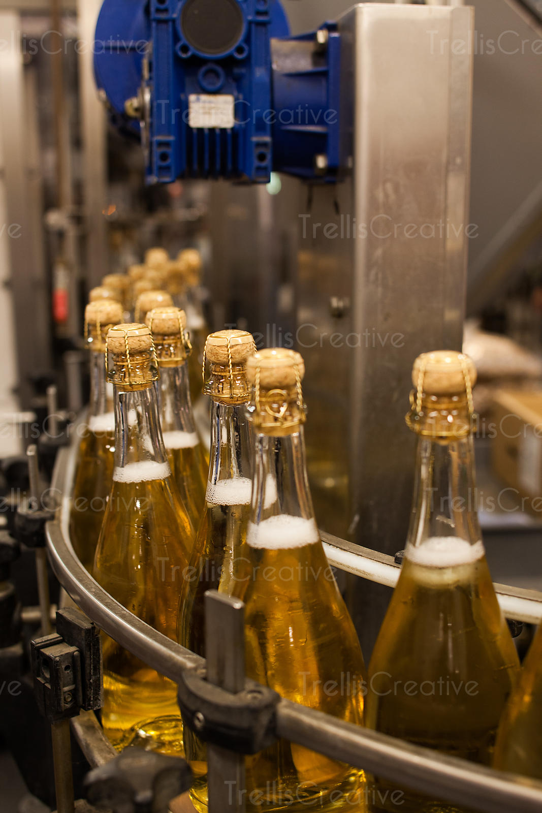 Bottles of sparkling wine on a winery bottling line