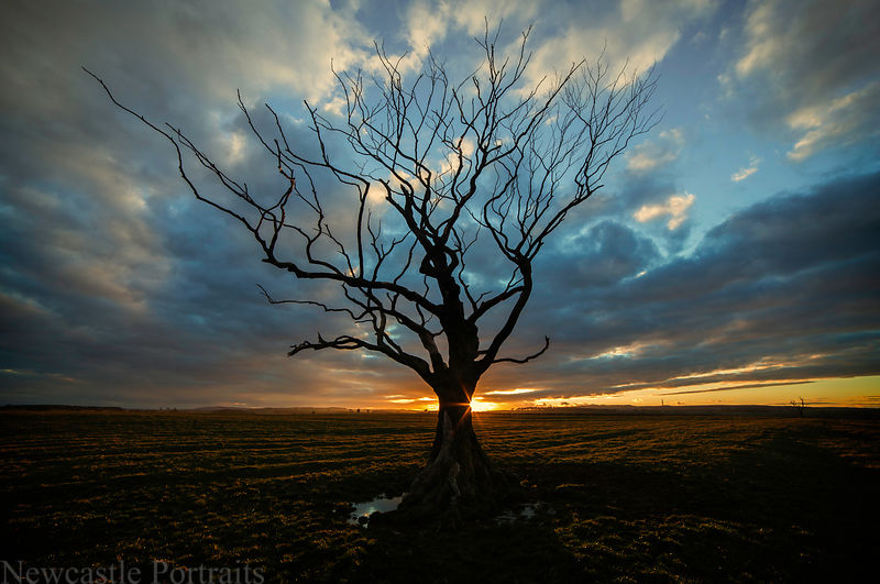 Northumberland Tree