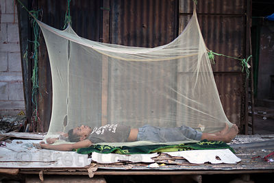 A homeless man sleeps in a mosquito net (used in part to ward off malaria) at the Car Parts Bazaar, Delhi, India