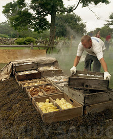Man working at a traditional clambake in Cape Cod