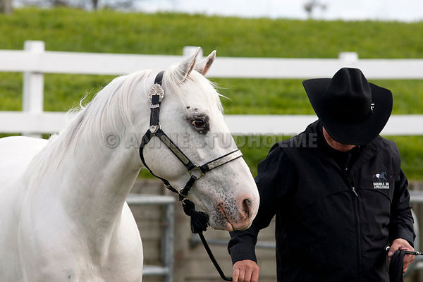 South Island Stallion Parade photos