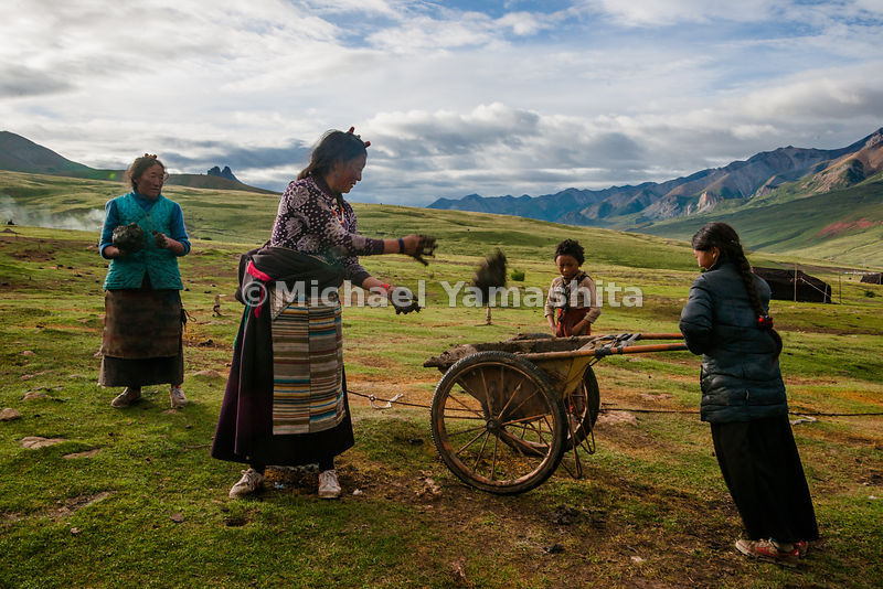 Chamadao, Route 317, from Tengchen to Bachen. Nomad encampment on Tsuri La Pass, 4200m. Women collect and dry yak dung for their kitchen fires.