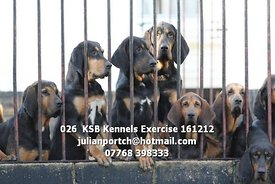 026__KSB_Kennels_Exercise_161212