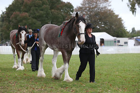 HOY_220314_Clydesdales_2373