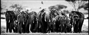 8513-Big_family_of_elephants_Kenya_2007_Laurent_Baheux