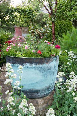 Decorative metal container planted with fuchsia and annuals including pelargoniums, with white Centranthus ruber 'Albus' in front and Prunus serrula behind. Private garden, Dorset, UK