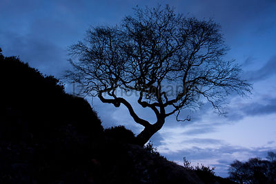 Tree Silhouette - Landscape Photography
