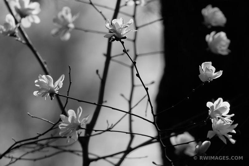 ❏ Fine Art Photography Prints           Magnolia Buy Framed Prints ...