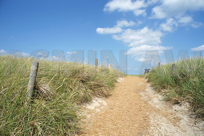 Beautiful path in the dunes of island Juist. File i sexclusive to stocksy: http://www.stocksy.com/64976