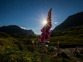 Scotland_Highlands_July_2014_229