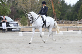 SI_Festival_of_Dressage_310115_Level_5_Champ_0815