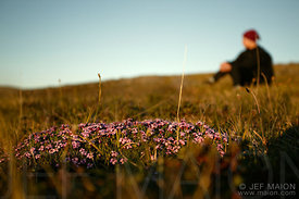 Woman sitting by tundra flowers