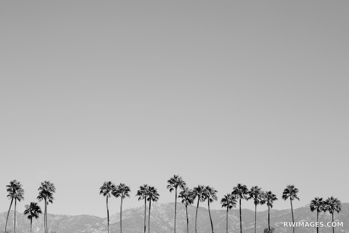 PALM TREES SANTA BARBARA ARCHITECTURE BLACK AND WHITE