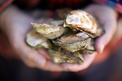 Port Oyster in hands