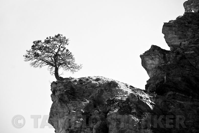 Lonely_tree_rock_bw
