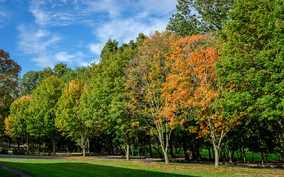 Row of trees, Fall, Princeton